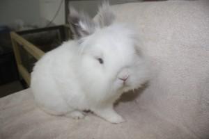 Rabbit-2-300×200