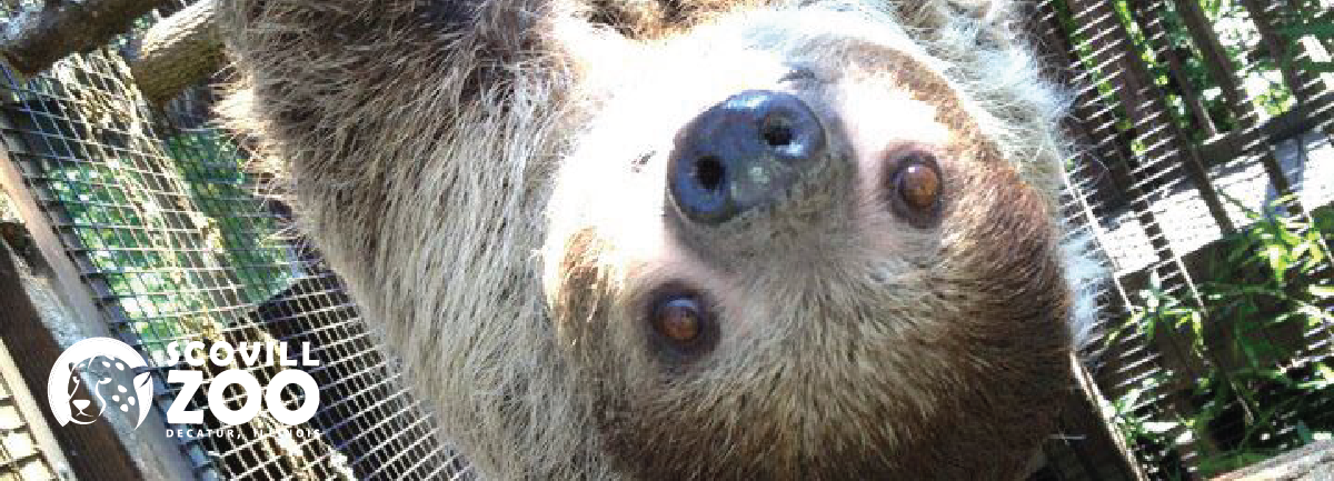 Zoo_Sloth_2018_Large-01