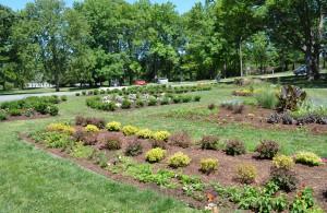 Fairview Park Rose Garden